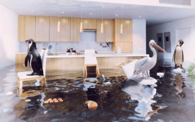 Flood-Proof Flooring